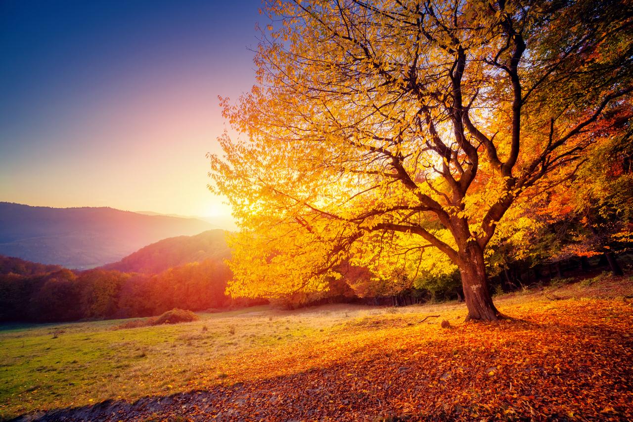 Mindfulness Århus, træ i efteråret